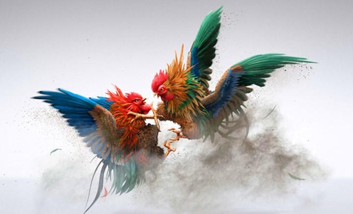 Chuyện đá gà Tết Đinh Dậu xưa: Đòn cáo | Tin tức mới nhất 24h - Đọc Báo Lao  Động online - Laodong.vn