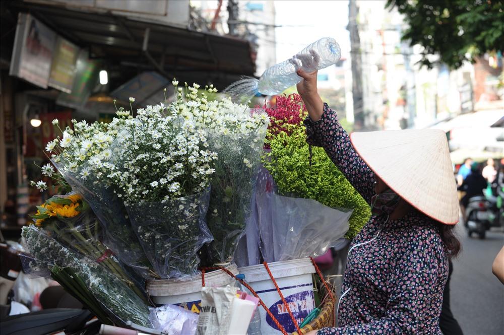 Từ bao giờ, bạn có thể bắt gặp những đóa cúc họa mi trắng muốt trên những chiếc xe đạp len lỏi khắp các ngõ phố Hà Nội. Ảnh: Trần Tuấn Anh