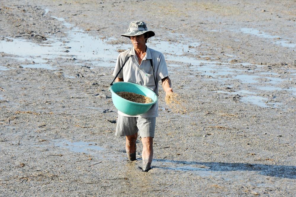 Nông dân vùng ĐBSCL gieo sạ lúa vụ đông xuân.