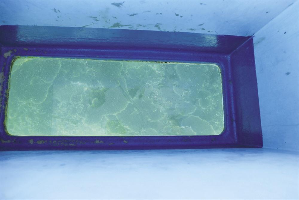 San hô rực rỡ sắc màu dưới làn nước trong như pha lê. Ảnh: Trường Sơn