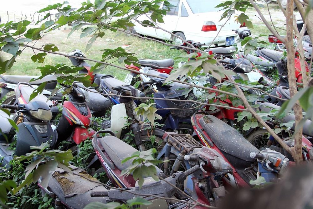 Thay vì được che chắn bởi hệ thống mái che, những chiếc xe này lại được cỏ dại bao trùm.