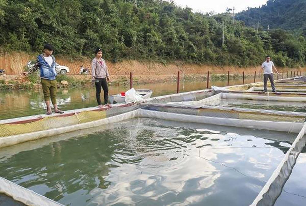 Người dân phải chuyển gấp các bè nuôi cá lồng sau sự cố vỡ bể chứa chất thải.