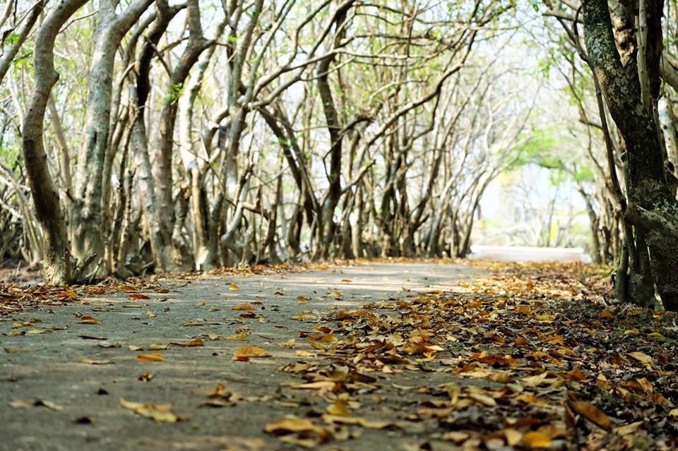 """Con đường mới dẫn vào Rú Chá, mùa này sắc thu xốn xang không thua gì những """"trời thua"""" danh tiếng khác... Ảnh: Hạnh Nhơn"""