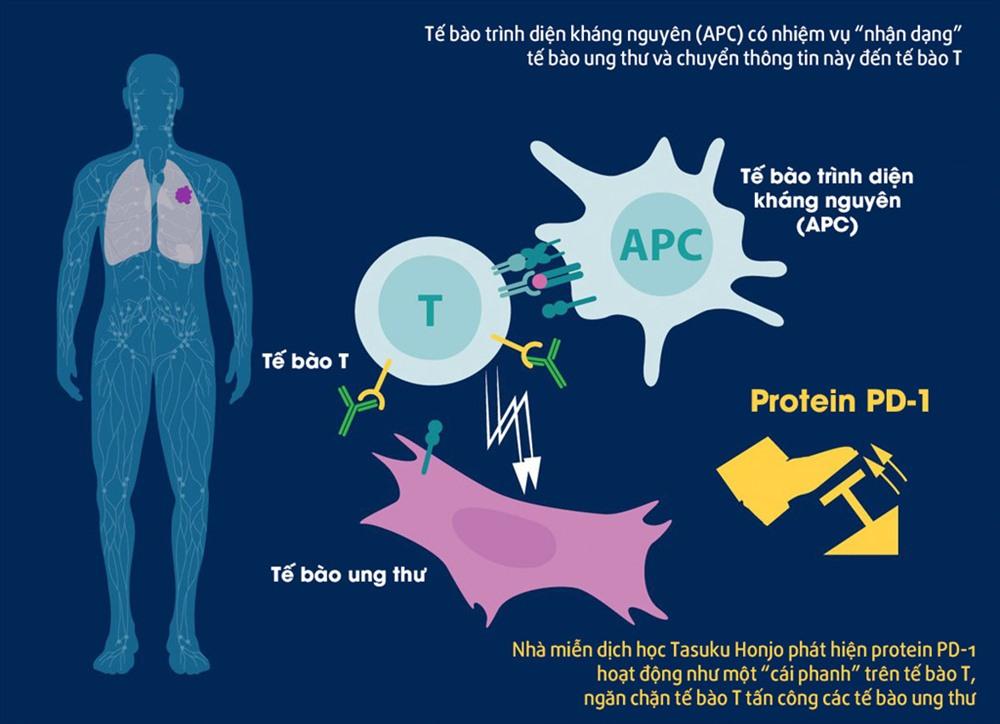 Cơ chế hoạt động của protein PD-1 trong việc điều trị ung thư, phát hiện của ông Honjo. Ảnh: Twitter/Nobel Prize.