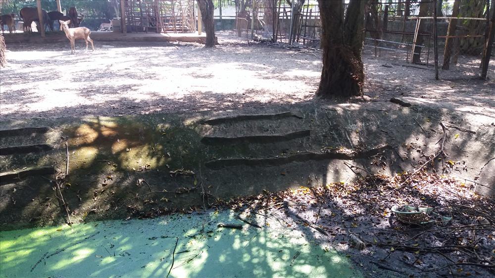Nước tại một khu vực nuôi thú cô đặc, màu xanh lục, có rác...