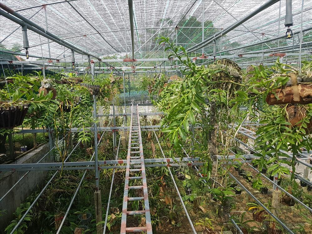 Vườn lan rộng 500m2 được đầu tư khá bài bản với hệ thống nhà giàn, màng lưới bao phủ