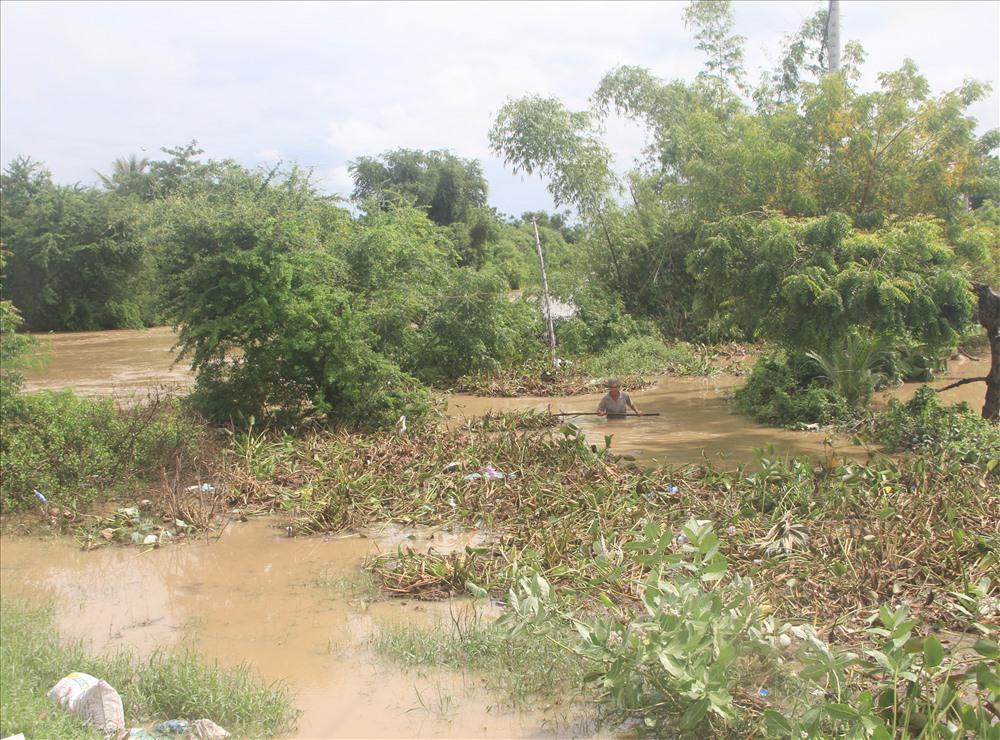 Nước lũ chưa rút, nhưng người dân vùng ngập thôn Từ Tâm 1, xã Phước Hải liều mình để đẩy những lớp lục bình khơi thong dòng chảy.