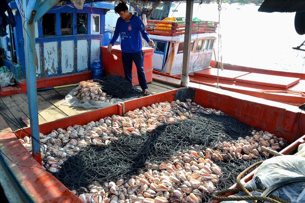 Đa số người dân Sơn Hải sống bằng nghề đánh bắt hải sản. Ảnh: Lục Tùng