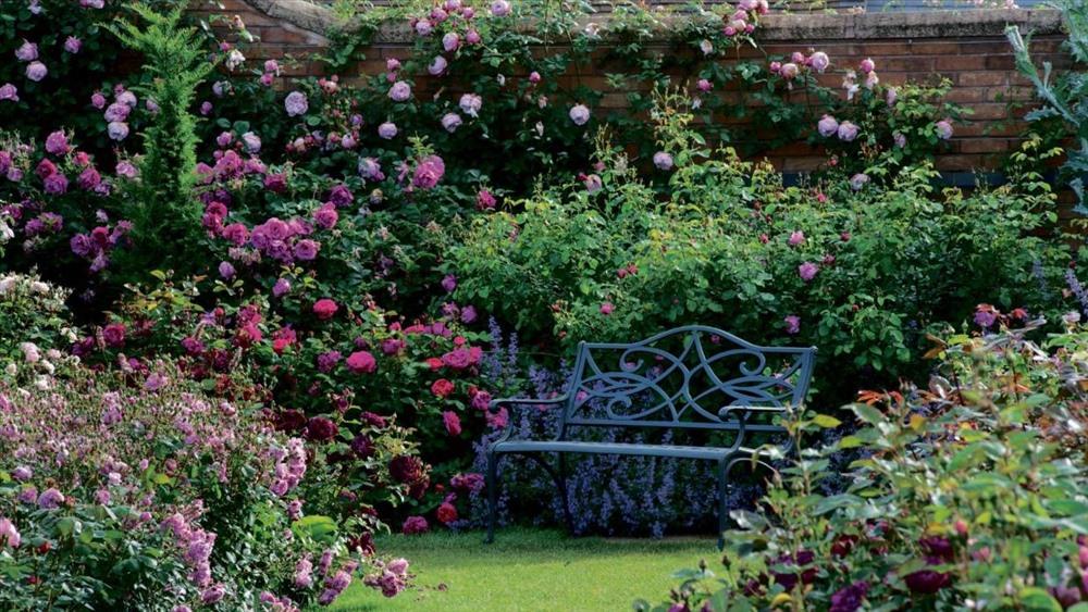 Hoa hồng được tạo ra bằng cách lấy DNA từ các cây hiện có và lai chúng lại với nhau để tái tạo các đặc điểm thuận lợi nhất định.