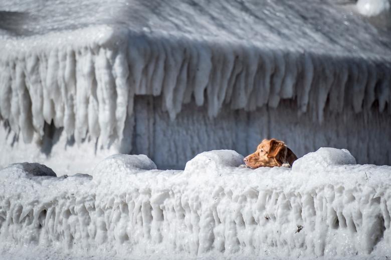 Chú chó này đang quan sát xung quanh ngôi làng đang bị bao phủ trong băng của chú ở Vịnh Faxe, phía nam Copenhagen, Đan Mạch