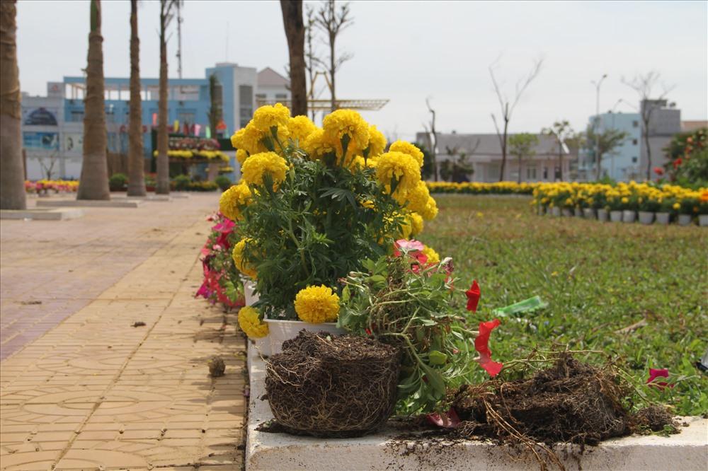 UBND TP Tuy Hòa giao công an điều tra vụ cướp hoa này. Ảnh: Văn Định