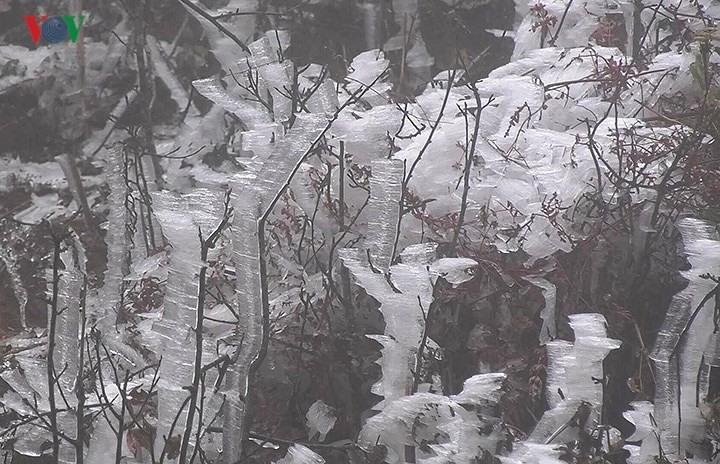 Hiện tượng băng giá phủ trắng tại Mù Căng Chải. Ảnh: Theo VOV