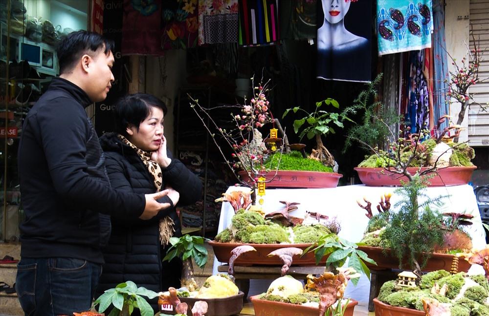 Người dân thủ đô thích thú với linh chi bonsai.