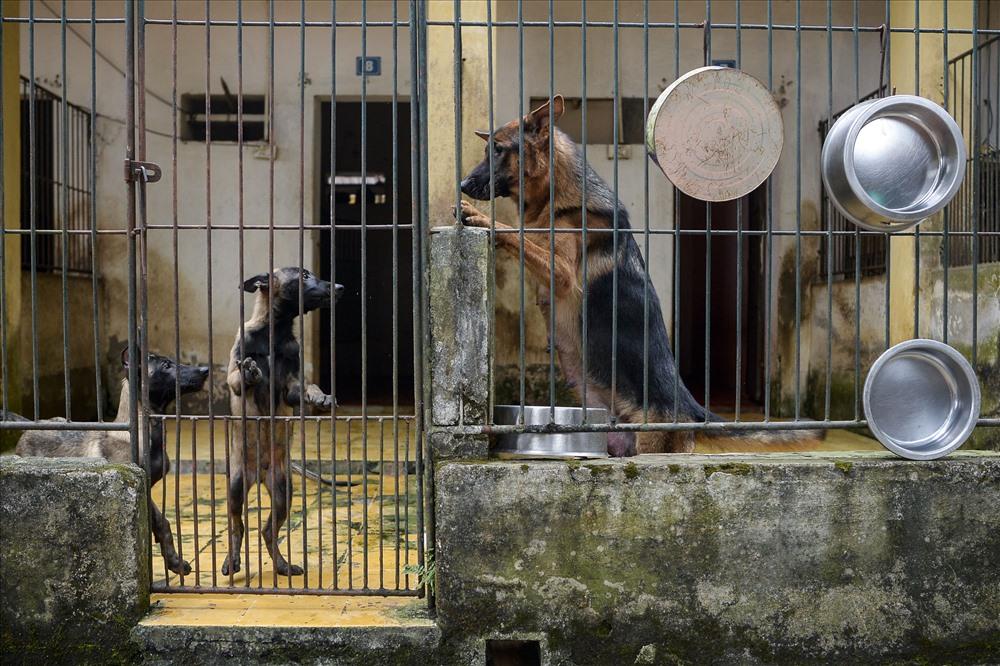 Chó mẹ và chó con tại khu ở riêng. Không chỉ huấn luyện và tác chiến, C69 Bộ Công an còn phối giống và phát triển nguồn gien cho các chiến sĩ cảnh khuyển.