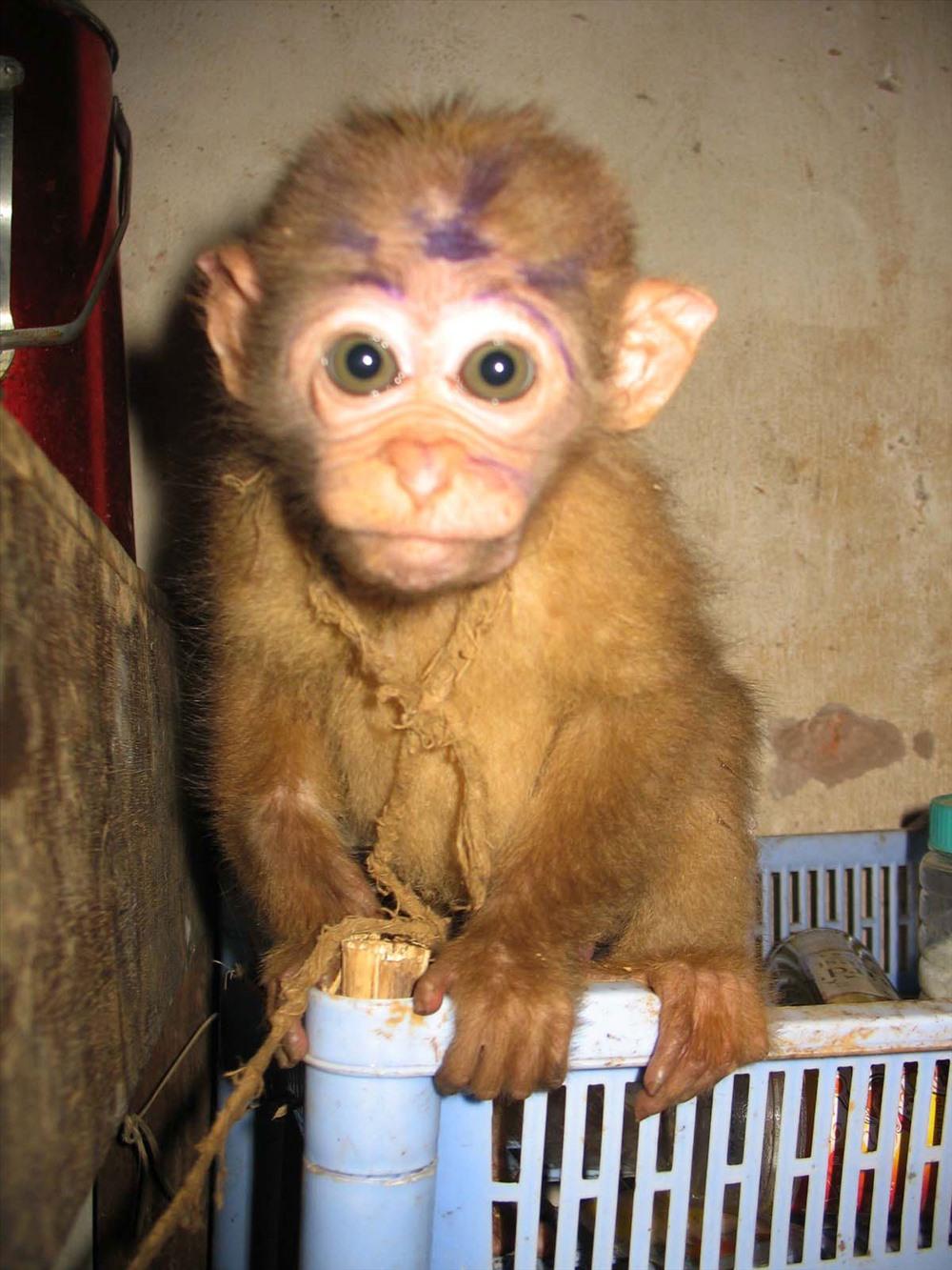 Động vật hoang dã bị tàn sát và trưng bày, bán buôn ở Việt Nam. Ảnh: Tâm Ninh.