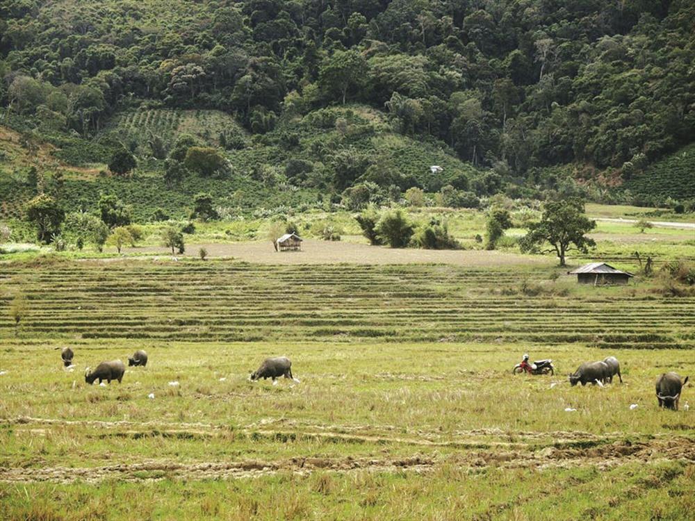 Cảnh thanh bình ở thôn R'lơm, xã Tu tra, huyện Đơn Dương, tỉnh Lâm Đồng. Ảnh: M.P