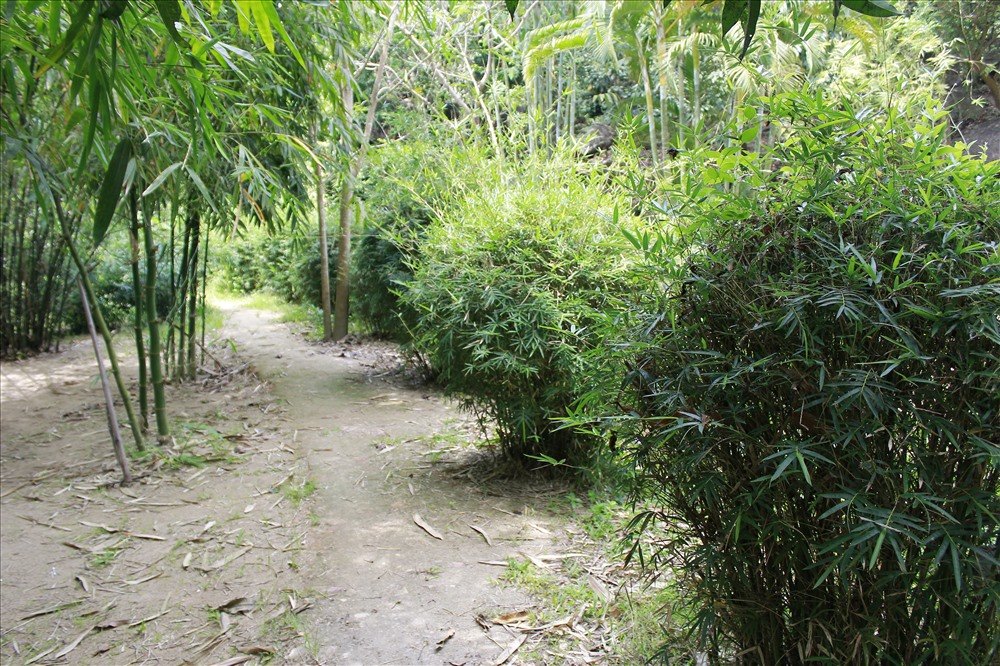 Lối đi xanh mướt hàng tre