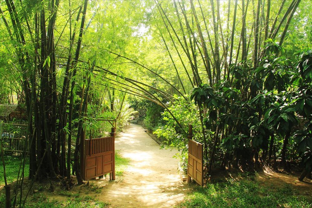 Những con đường làng xanh mát bóng tre, những hàng rào chè tàu nối nhau qua lại như chính tình cảm liền mạch của những con người nơi đây.