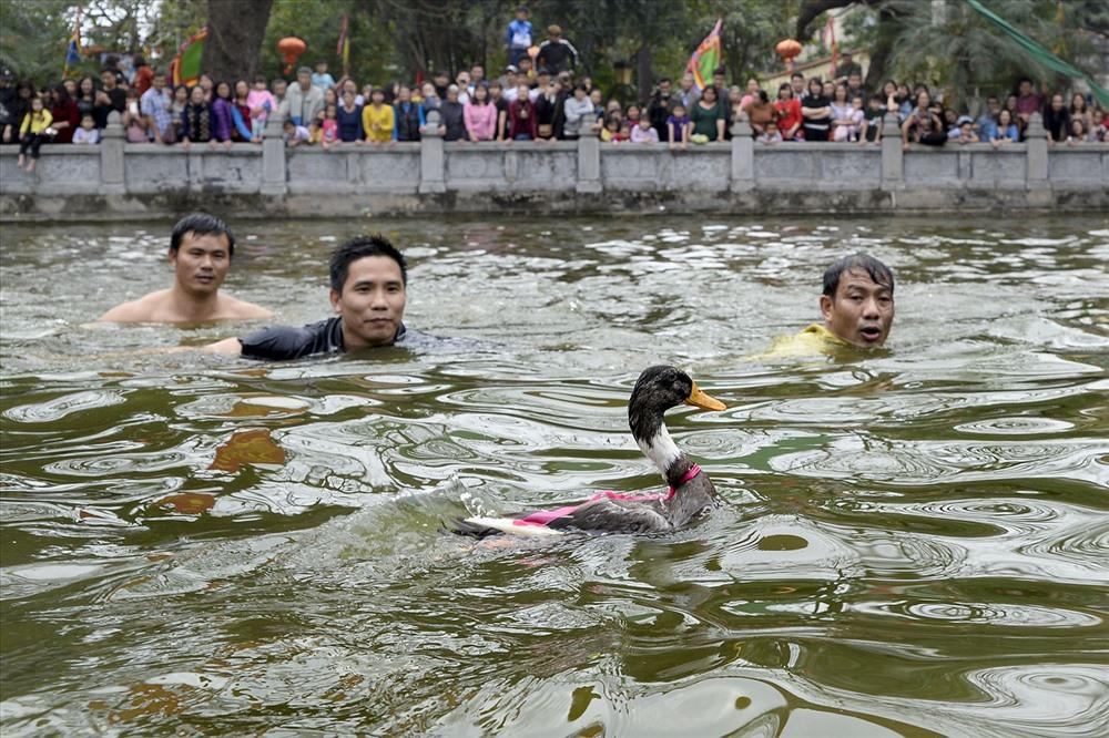 Sau phần lễ, được mong chờ nhiều nhất là trờ chơi dân gian Bắt vịt. Bảy con vịt được thả xuống ao làng, các thanh niên trong làng bơi theo để bắt từng chú vịt.