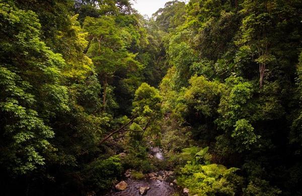 Hội thảo khoa học về Tiềm năng di sản công viên địa chất Gia Lai - ảnh 3
