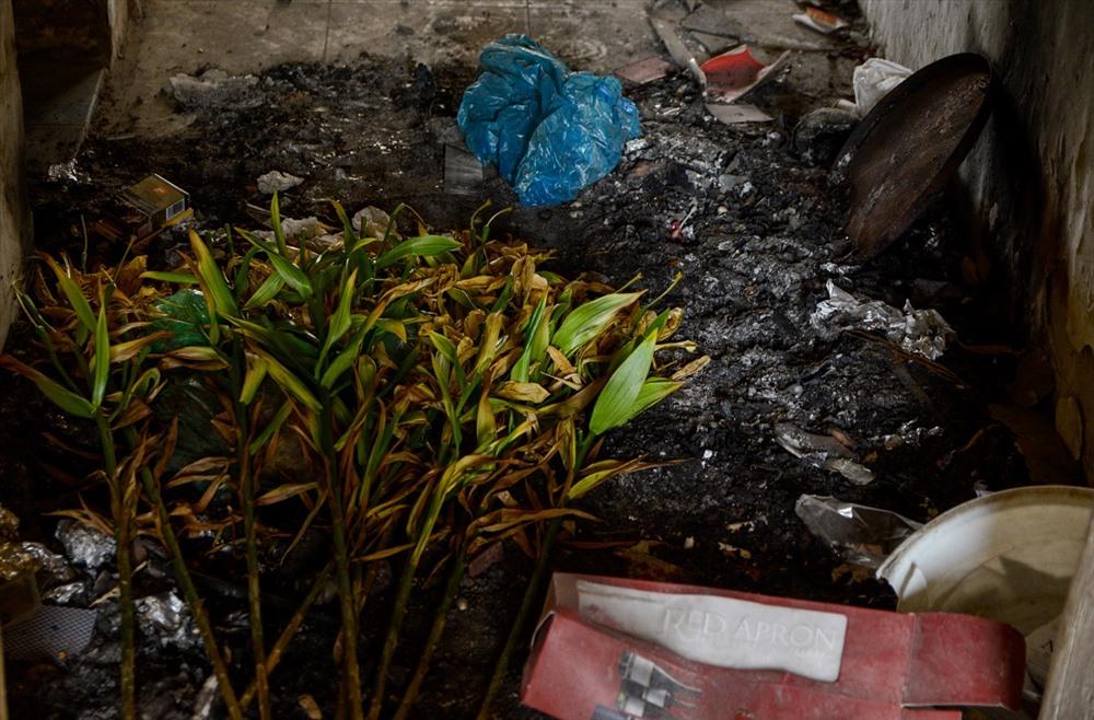 Rác cũ, rác mới chồng chất lên nhau, phân động vật ở khắp nơi.