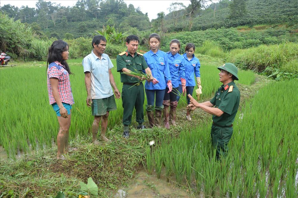 Hướng dẫ kỹ thuật trồng lúa nước. Ảnh: PV
