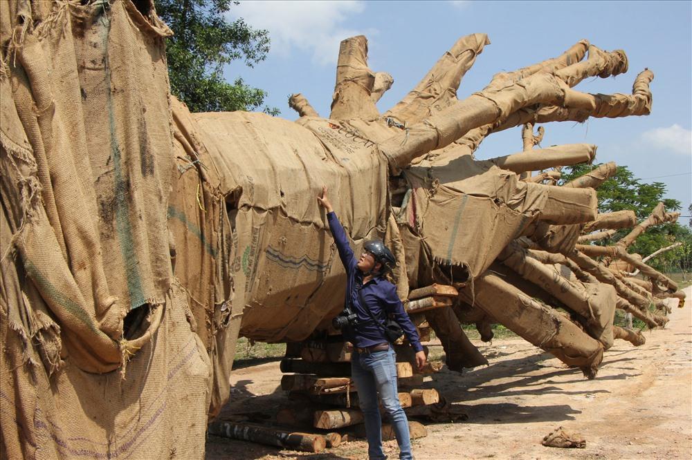 Hồ sơ 1/3 cây đa đang bị tạm giữ tại Thừa Thiên Huế là không đúng với thực tế. Ảnh: Đốc Thành