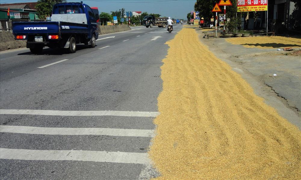 Lòng được quốc lộ bị chiếm dụng để phơi lúa (ảnh: P.V)