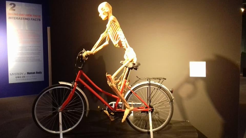 Bộ xương đạp xe
