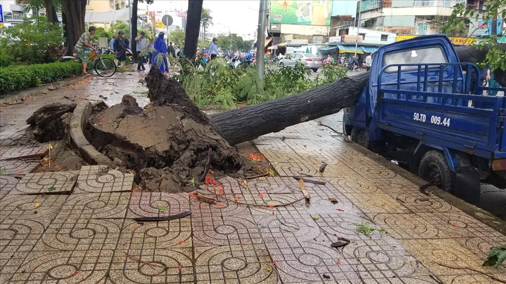 Thời gian gần đây liên tục xảy ra tình trạng cây xanh ngã đổ, đè trúng xe cộ, người đi đường. Ảnh: T.S