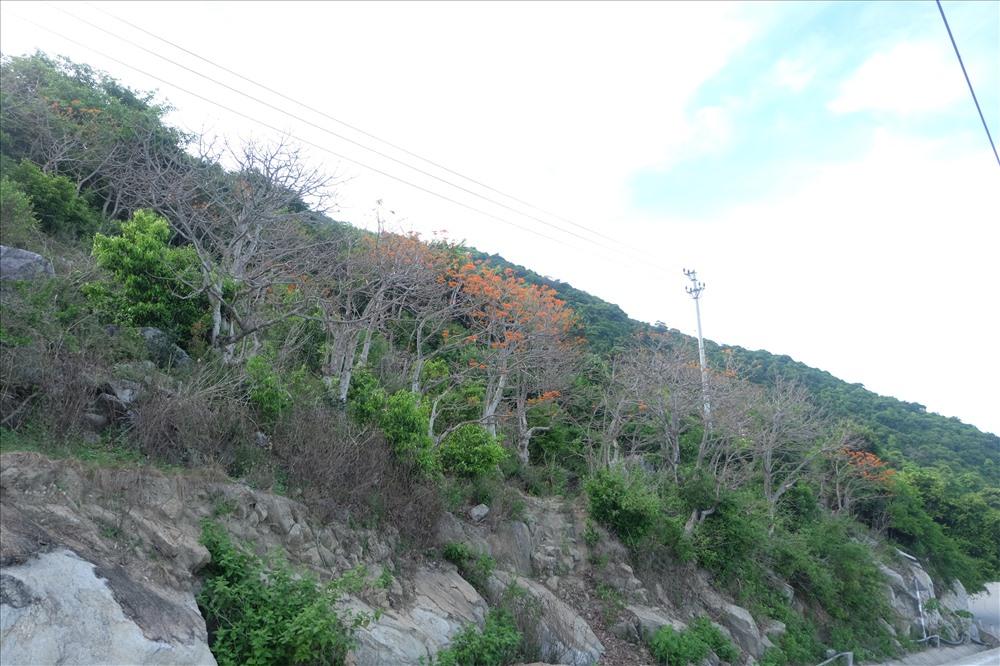 Kéo dài 5km từ thôn Bãi Làng đến tận thôn Bãi Hương của xã đảo.
