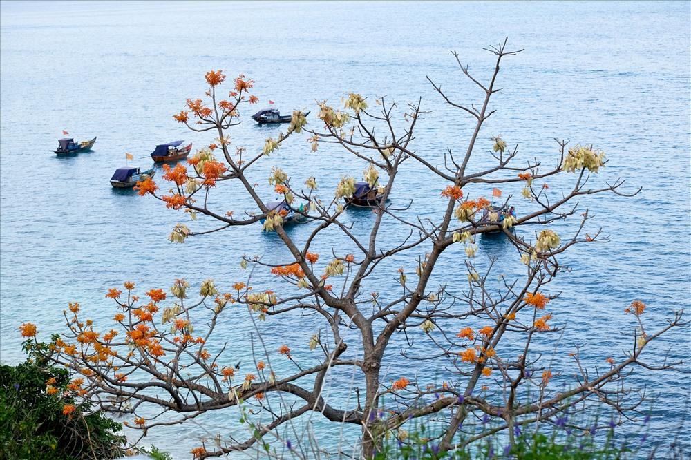 Thông thường khoảng vào tháng tư lá cây bắt đầu ngả màu vàng