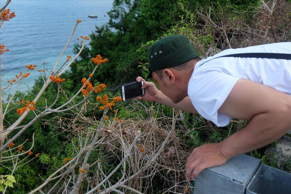 Khách du lịch chụp ảnh những bông hoa ngô đồng