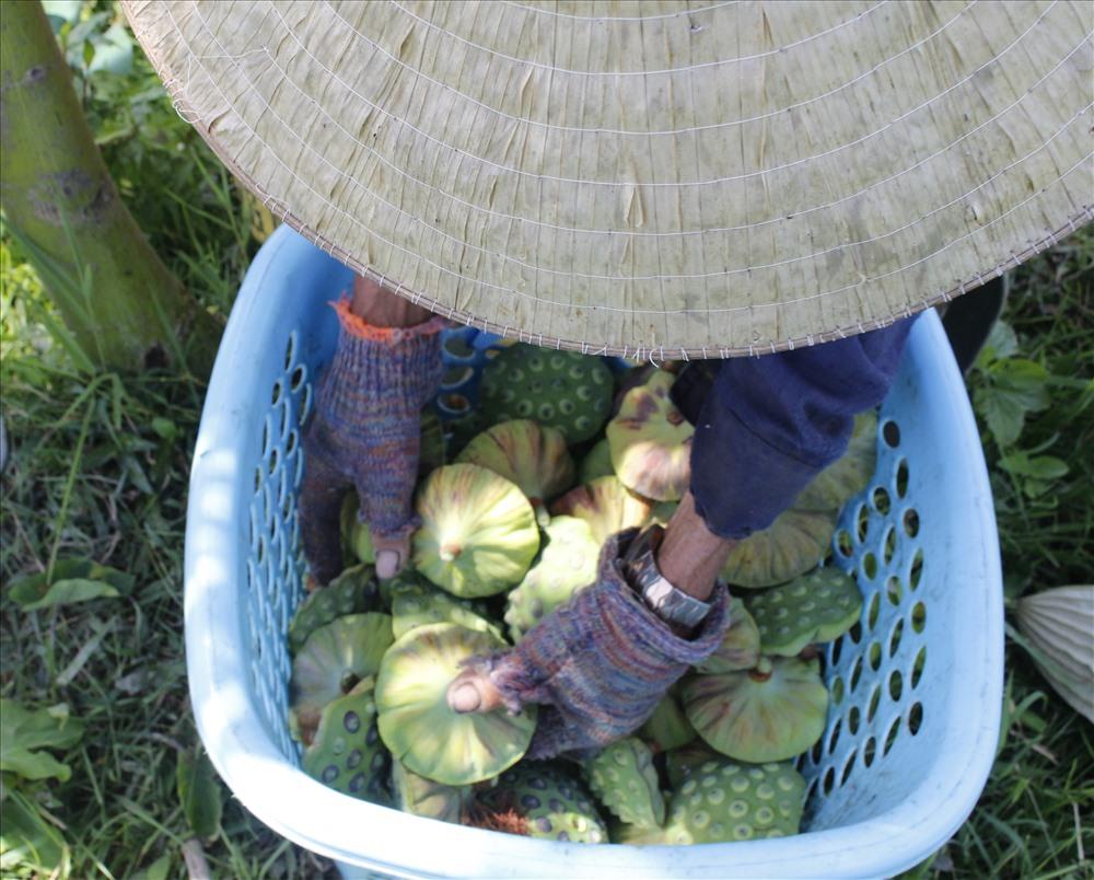 Người dân sống dựa vào nghề trồng sen là chính. Mỗi năm một vụ từ tháng 3 đến tháng 8.