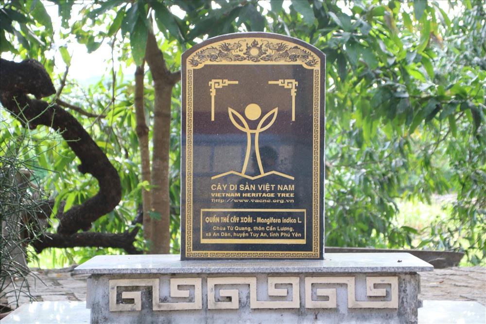 Cụm 20 cây xoài ở chùa được công nhận là Cây di sản. Ảnh: Đ.Phùng