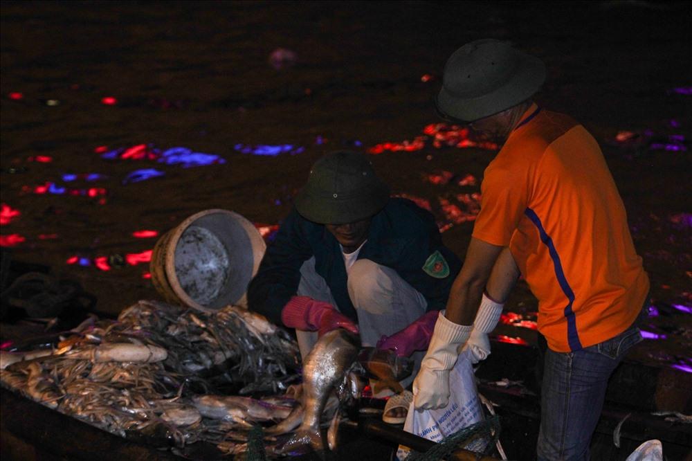 Cá chết trôi dạt vào bờ, nhiều con bắt đầu phân hủy, ruồi nhặng bâu đầy khiến các con đường quanh hồ bốc mùi hôi tanh nồng nặc.