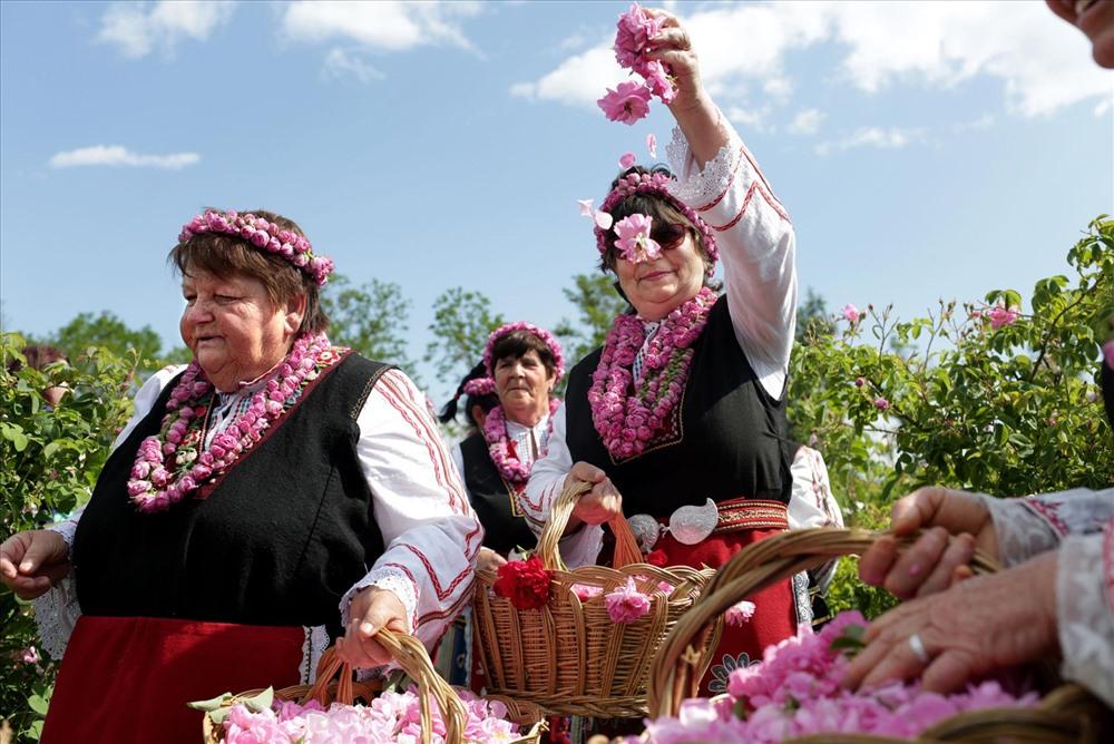 Phụ nữ trong trang phục truyền thống Bulgaria hái hoa trên những cánh đồng gần Buzovgrad trong lễ hội hàng năm. Ảnh: National Geographic