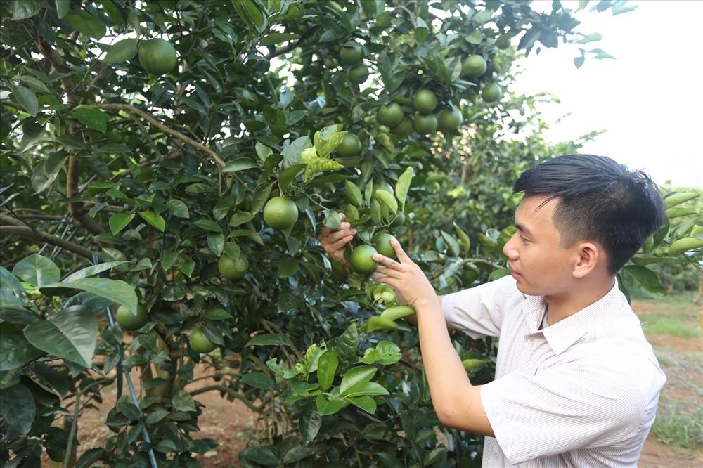 Kỹ thuật viên kiểm tra chất lượng sản phẩm cam Vinh.