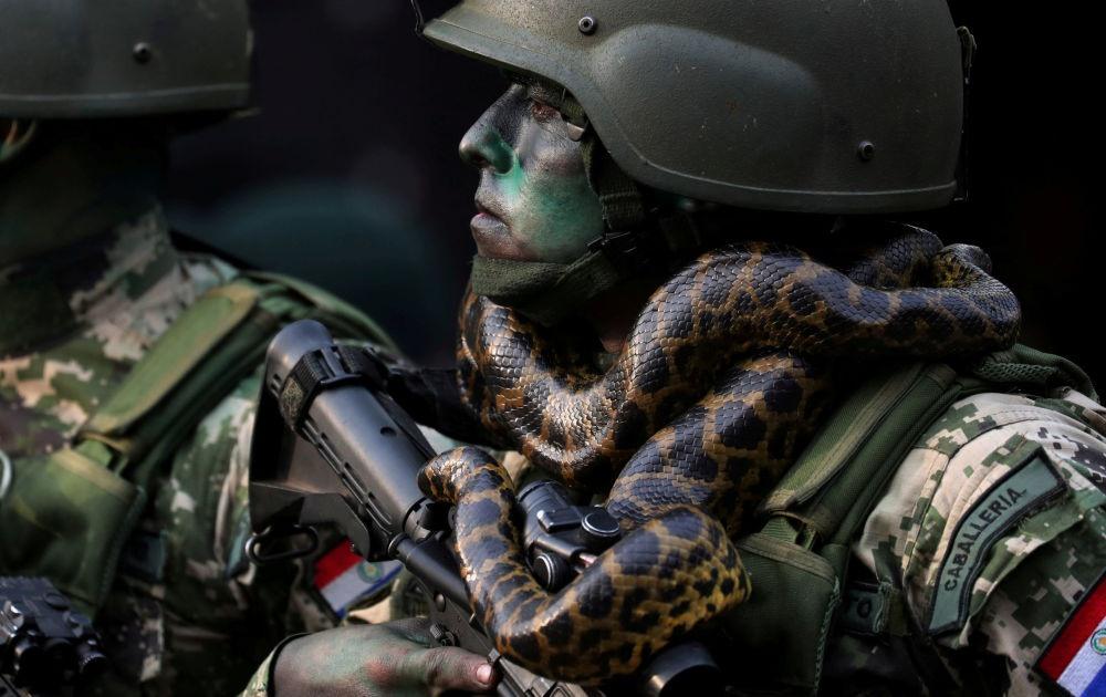 Lính đặc nhiệm với con rắn quấn cổ trong cuộc diễu binh Asuncion, Paraguay - Ành: Reuters