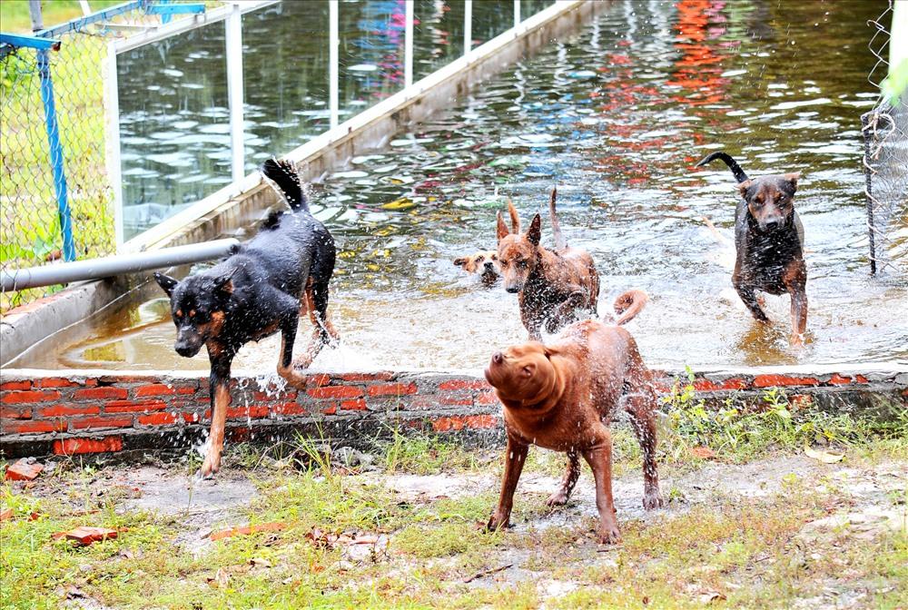 Chó Phú Quốc bơi lội rất giỏi. Ảnh: Lục Tùng