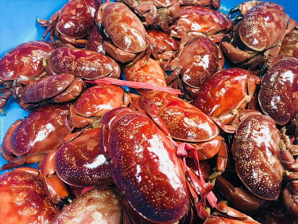 Mua tận gốc nên giá hải sản ở đây khá phải chăng. Loại cua cù kì đỏ đặc sản có giá khoảng 120.000 - 170.000 đồng/kg. (Ảnh: Phạm Tâm)