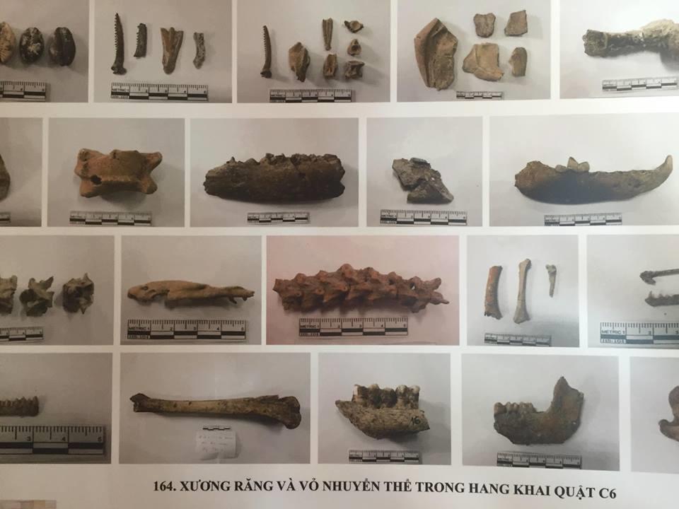 Một số mẫu vật mới nhất được tìm thấy ở hang động núi lửa Krông Nô. Ảnh: PĐ.