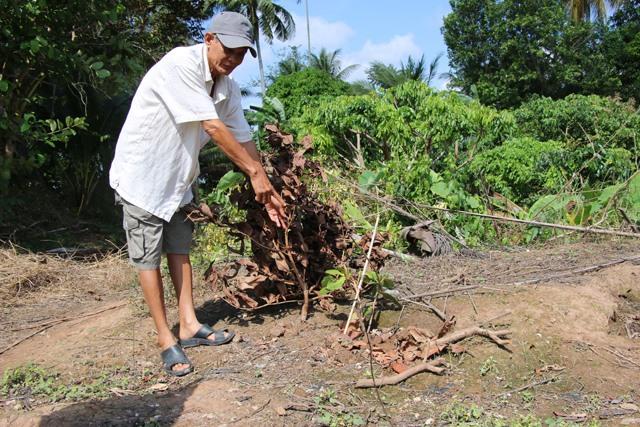 Vườn mận của gia đình ông Đỗ Thanh Minh bị chặt phá không thương tiếc. Ảnh: Dân Việt