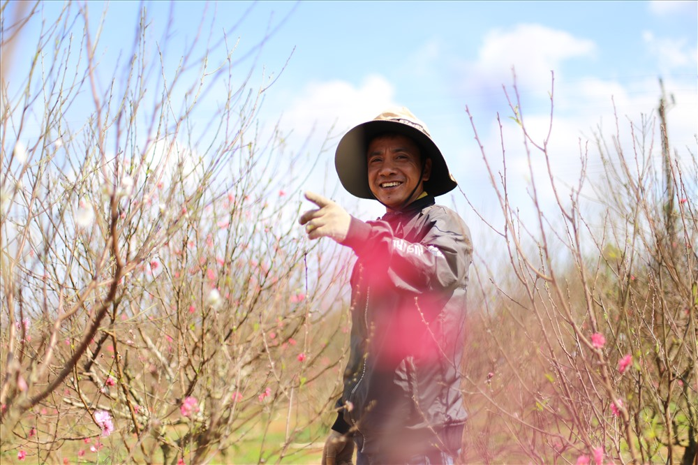 Người dân Đắk Lắk vui mừng vì đào năm nay nở đẹp và được giá.