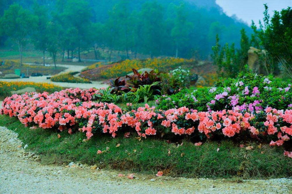 Nhiều loài hoa đẹp nở rộ chờ đón du khách đến thưởng lãm tại Bái Đính. Ảnh: BTC.