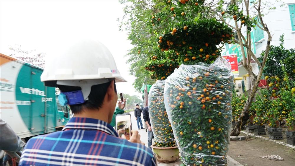 Quýt lục bình ngay khi cập bến Hà Nội đã nhận được sự chú ý của khách qua đường.Nhiều người dừng lại chiêm ngưỡng, thậm chí còn chụp ảnh lưu giữ làm kỉ niệm vì lần đầu chứng kiến cây quýt khủng.