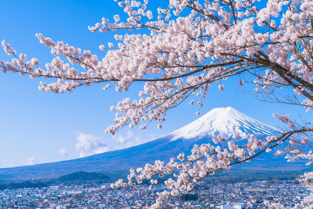 Tour thuê bao Fukushima đón xuân và thưởng ngoạn hoa anh đào dịp Tết của Vietravel sẽ giúp du khách tiết kiệm được 30% chi phí tour thông thường nếu đến với Nhật Bản vào dịp này. Ảnh: Soha