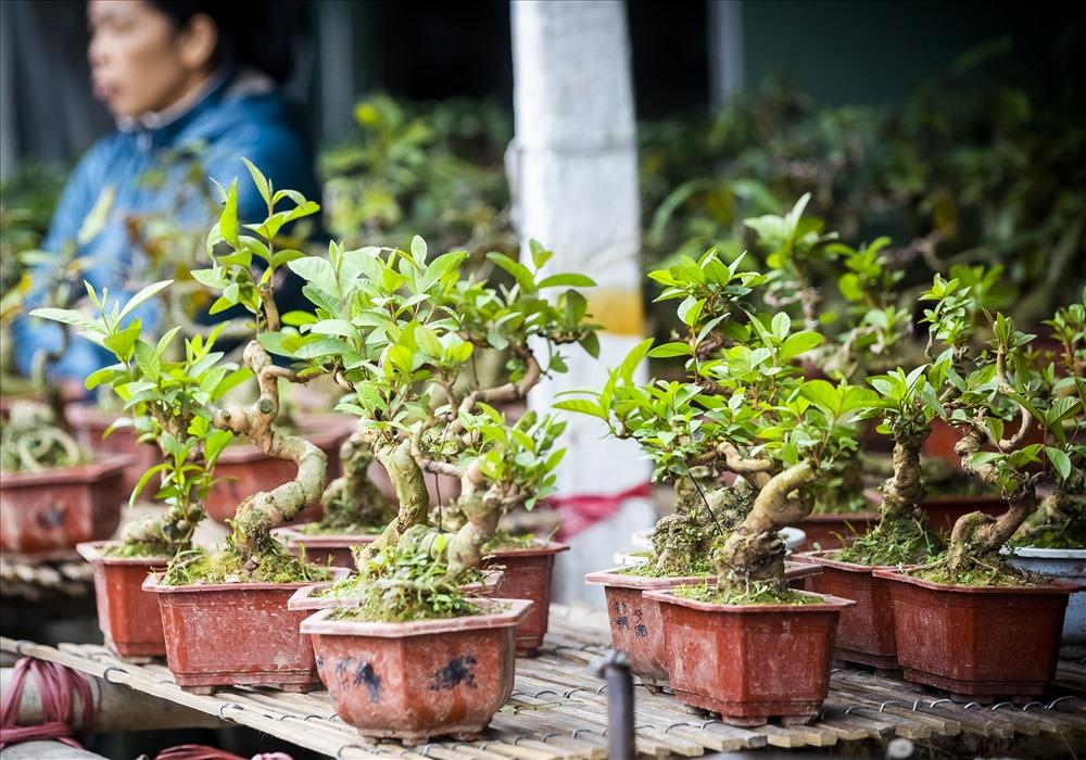 Chợ Viềng Nam Định vẫn được biết đến là phiên chợ đặc trưng của dân cư nông nghiệp vùng đồng bằng châu thổ sông Hồng, nơi đây không bán mua những sản phẩm hào hoáng đắt tiền mà chủ yếu là các loại cây trồng, nông cụ, đồ cổ chợ Viềng và đồ giả cổ... đủ chủng loại, chất lượng và giá thành khác nhau.