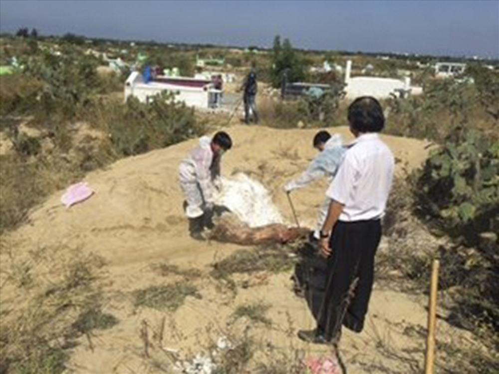 Chi cục Chăn nuôi và Thú y tỉnh Ninh Thuận đã phối hợp với chính quyền địa phương tiến hành tiêu hủy 15 con lợn tại Nghĩa trang thôn Phú Thọ. (Ảnh của Chi cục trưởng Chi cục Chăn nuôi và Thú y tỉnh Ninh Thuận)