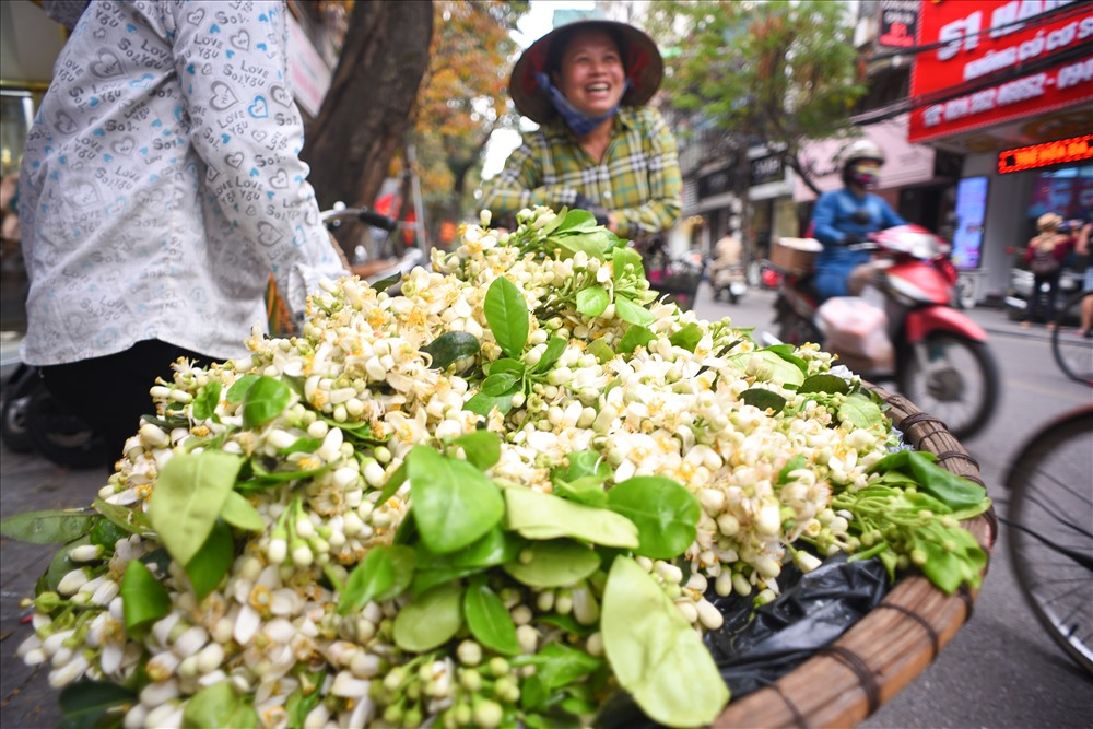 Không biết từ bao giờ mà người dân Hà Nội coi hoa bưởi như một trong những mùa hoa đặc biệt trong năm. Tháng 3 hoa bưởi, tháng 5  hoa bằng lăng, tháng 10 hoa sữa.